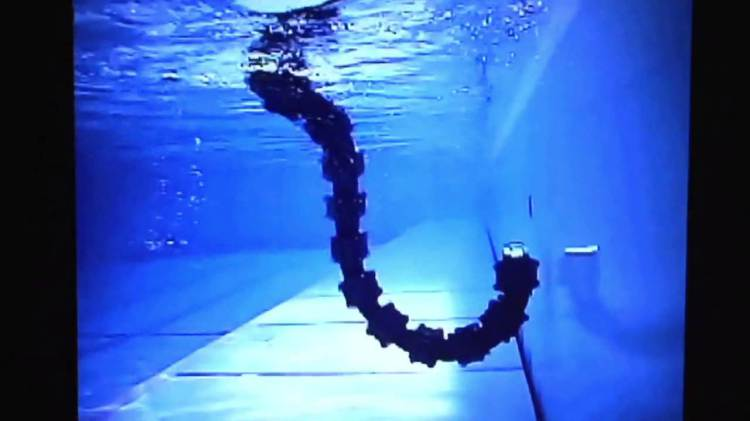 Le robot serpent aquatique (3)