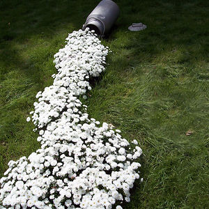 spilled-flowers-garden-ideas-3__300